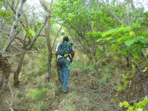 Following foot trail.